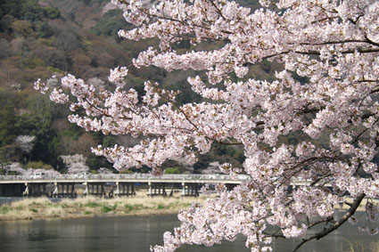 arashiyama410b.jpg